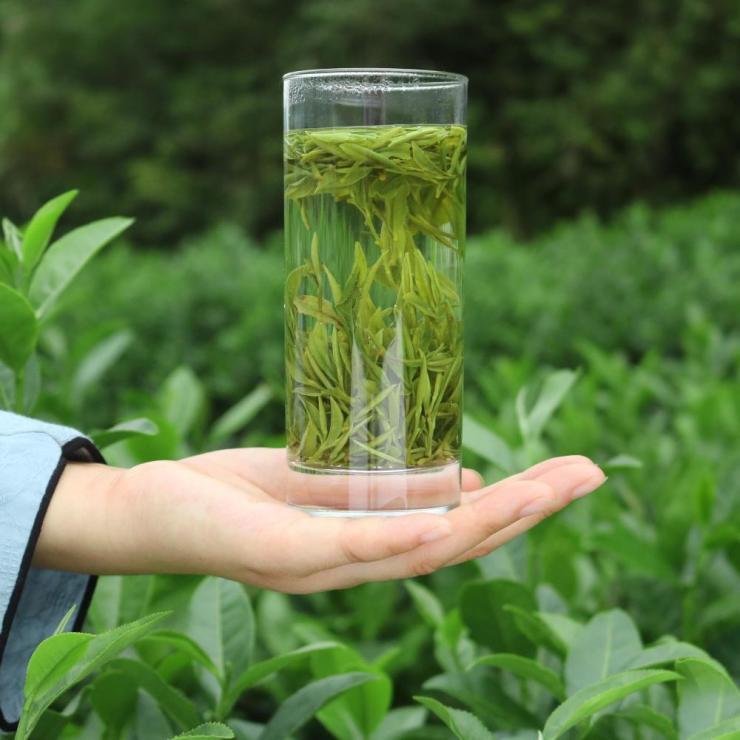 黄山毛峰2021春茶已全面开采 京东超市开启同步预售